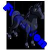 Black Arabian Horse