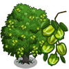 Arjun Tree