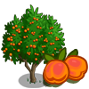 Golden Apricot